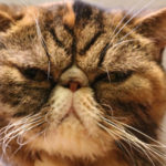 大好きな猫と触れ合いたい!
