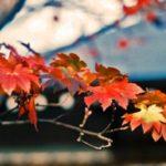京都で秋を感じましょう