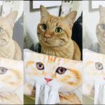 猫もびっくり!